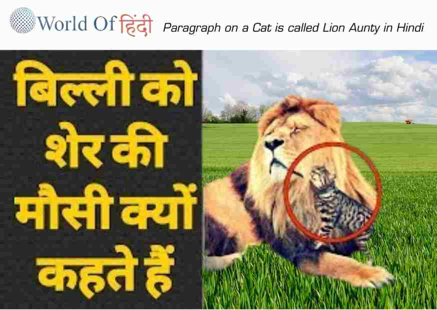 Paragraph on a Cat is called Lion Aunty in Hindi