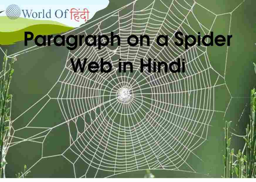 Paragraph on a Spider Web in Hindi